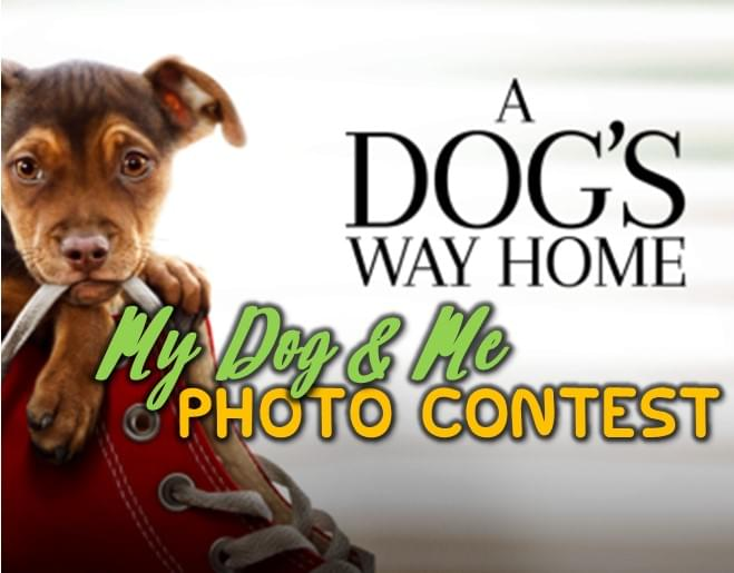 A Dog's Way Home: My Dog & Me Photo Contest