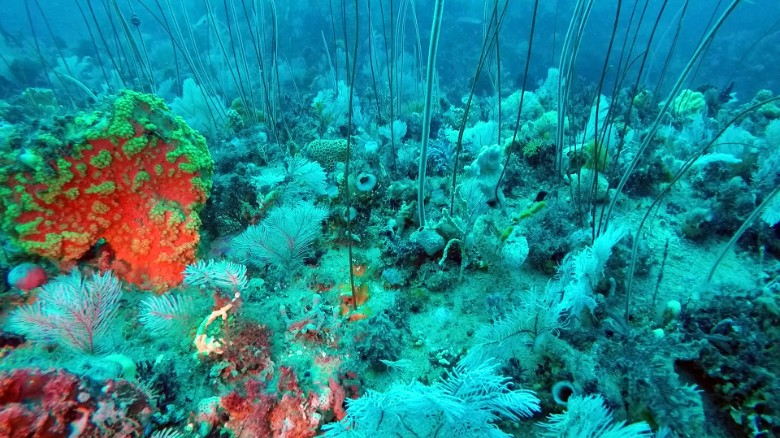 Underwater discovery rivals Great Barrier Reef