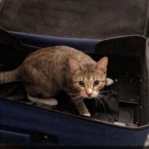 Cop Arrests Drunk Woman With Cat-Filled Suitcase