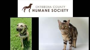 Oktibbeha County Humane Society Pets of the Week