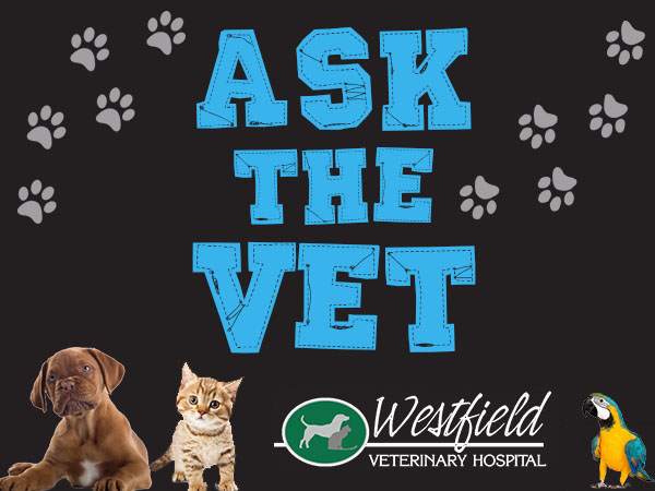 Ask the Vet with Hatfield & McCoy