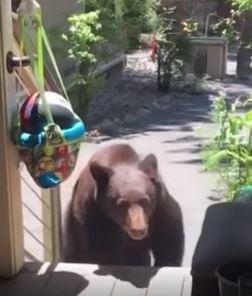 "Real life Mom scares Bear with her ""Mom Voice""."