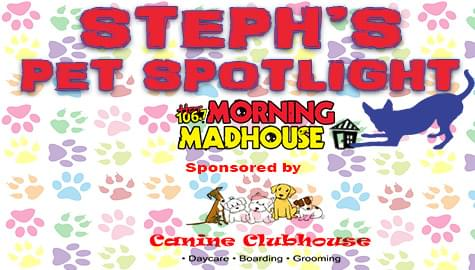 Steph's Pet Spotlight