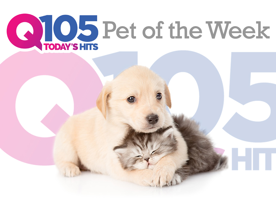 Q105's PET OF THE WEEK