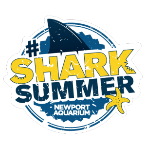 Shark Summer Coloring Contest!