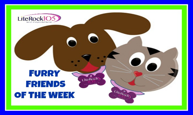 Meet Adele and Nellie – our latest FURRY FRIENDS of the WEEK! (1/16/17)