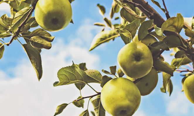 Top 4 Picks for Apple Picking in RI