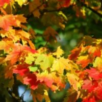 Peak Fall Foliage Map aka Where To Find The Pretty Leaves And When