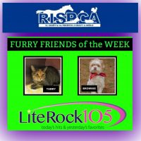 Meet Tabby & Brownie >> Our new FURRY FRIENDS of the WEEK! (1/7/19)