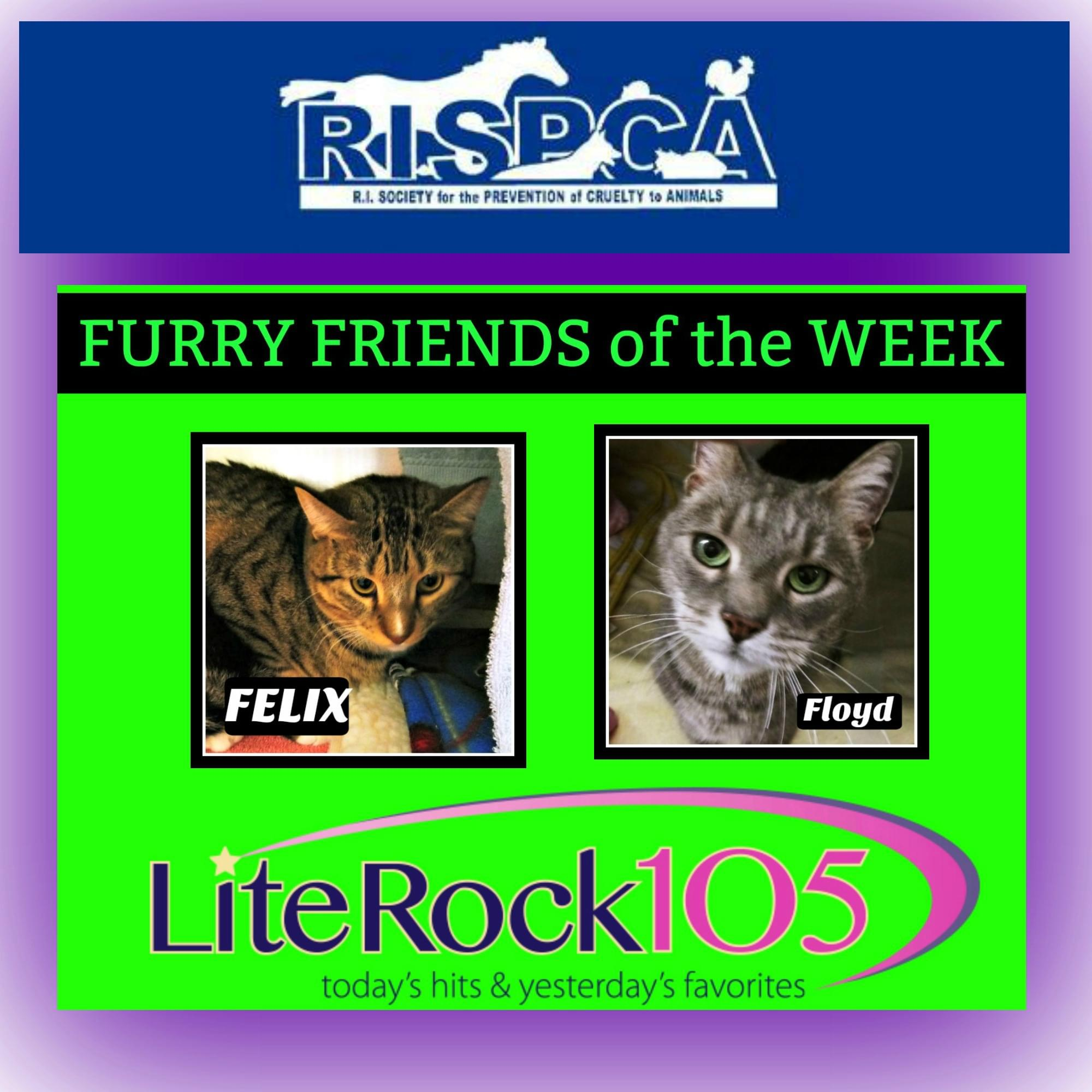 Our FURRY FRIENDS of the WEEK: 2 Cats! Felix & Floyd! (3/12/19)