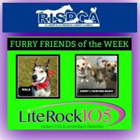 Nala, Donny and Princess Marie are our latest FURRY FRIENDS!