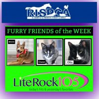 Meet Biggs, Owen and Otto, our new FURRY FRIENDS of the WEEK! (5/20/19)