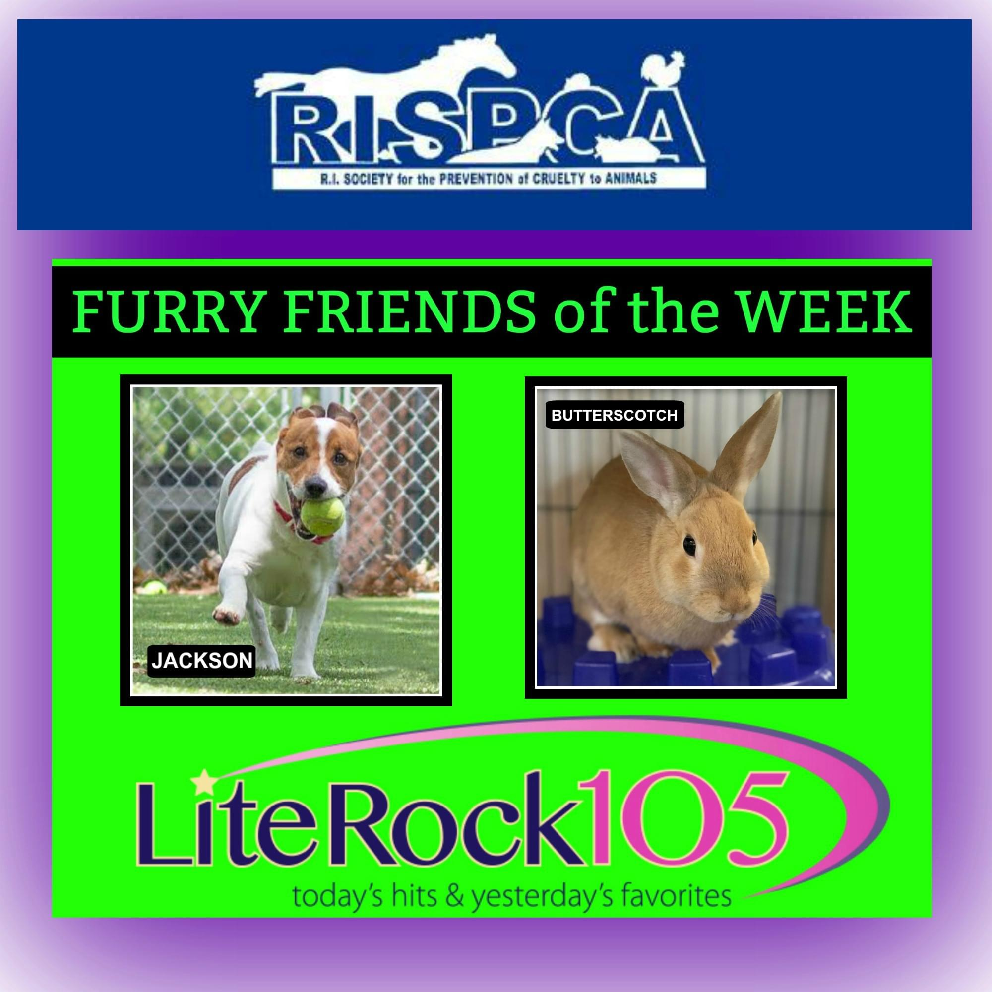 MeetJackson and Butterscotch! Our FURRY FRIENDS of the WEEK (7/8/19)