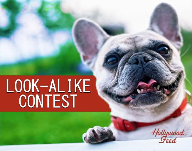 Dog Look Alike Contest Contest Rules