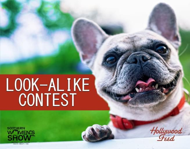 Dog Look Alike Contest – Hollywood Feed