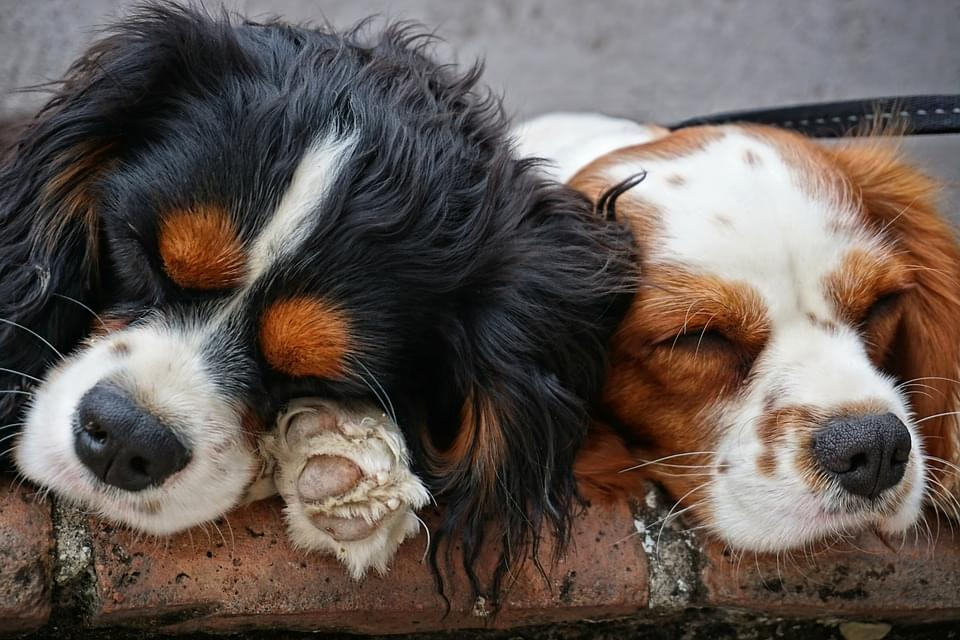 You'll Actually Sleep Better With Your Dog in the Bedroom