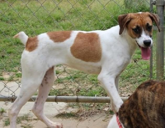 Pet of the Week: Kaylee the Hound/Jack Russell Terrier Mix Dog [PHOTOS]