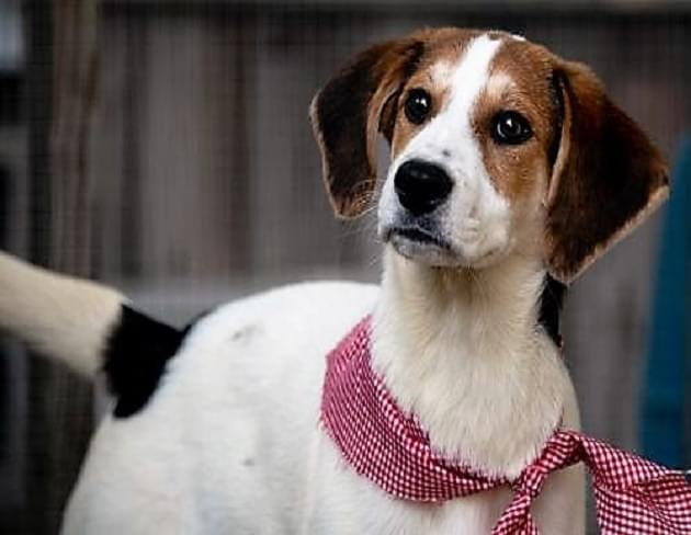 Pet of the Week: Dottie the Hound Mix Dog [PHOTOS]