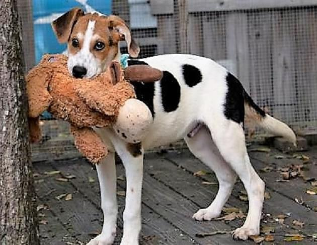 Pet of the Week: Cody the Hound Mix Dog [PHOTOS]