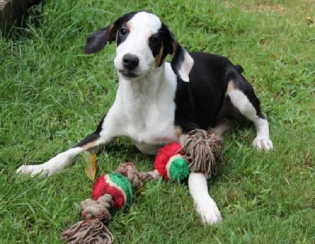 Pet of the Week: Poppy the Hound/Terrier Mix Dog [PHOTOS]