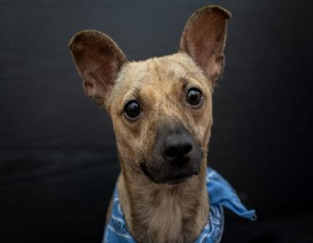 Pet of the Week: Fleahop the Terrier Mix Dog [PHOTOS]