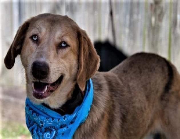 Pet of the Week: Gabby the Aussie/Labrador Mix Dog [PHOTOS]