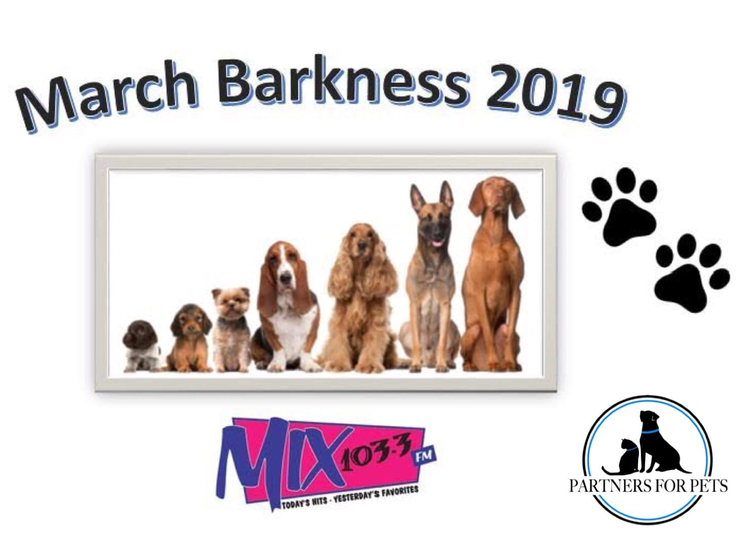MARCH BARKNESS 2019