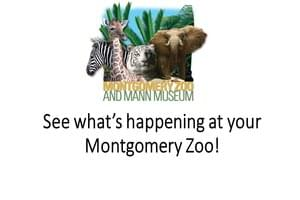 What's Up At The Montgomery Zoo?