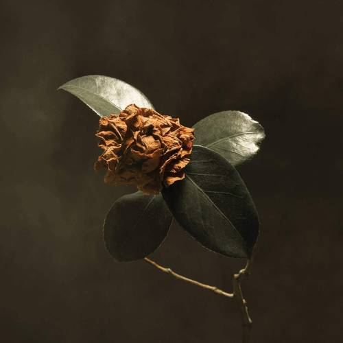 ALBUM OF THE WEEK: St. Paul & The Broken Bones – Young Sick Camellia