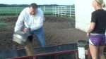 Inside Look: Life on a Cattle Farm
