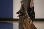 Decatur Police K-9 units visit B&G Club (Video Included)