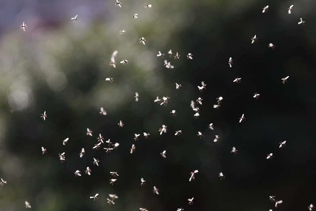 Gnats This Year Are Gnasty