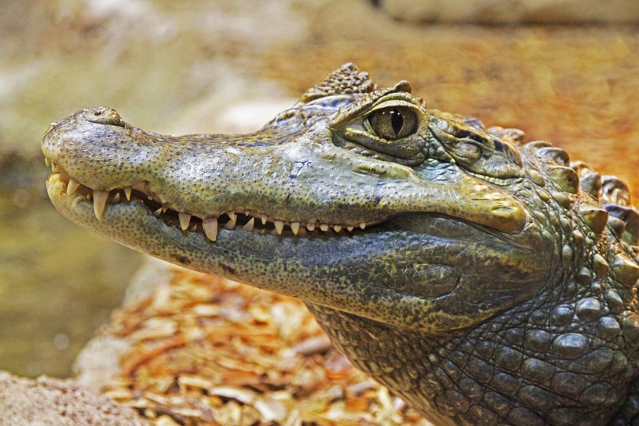 Alligator Ruins Florida Couple's Picnic Plans
