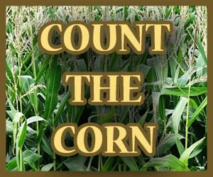 Count the Corn 300