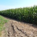 Illinois Corn and Soybeans Making Good Progress